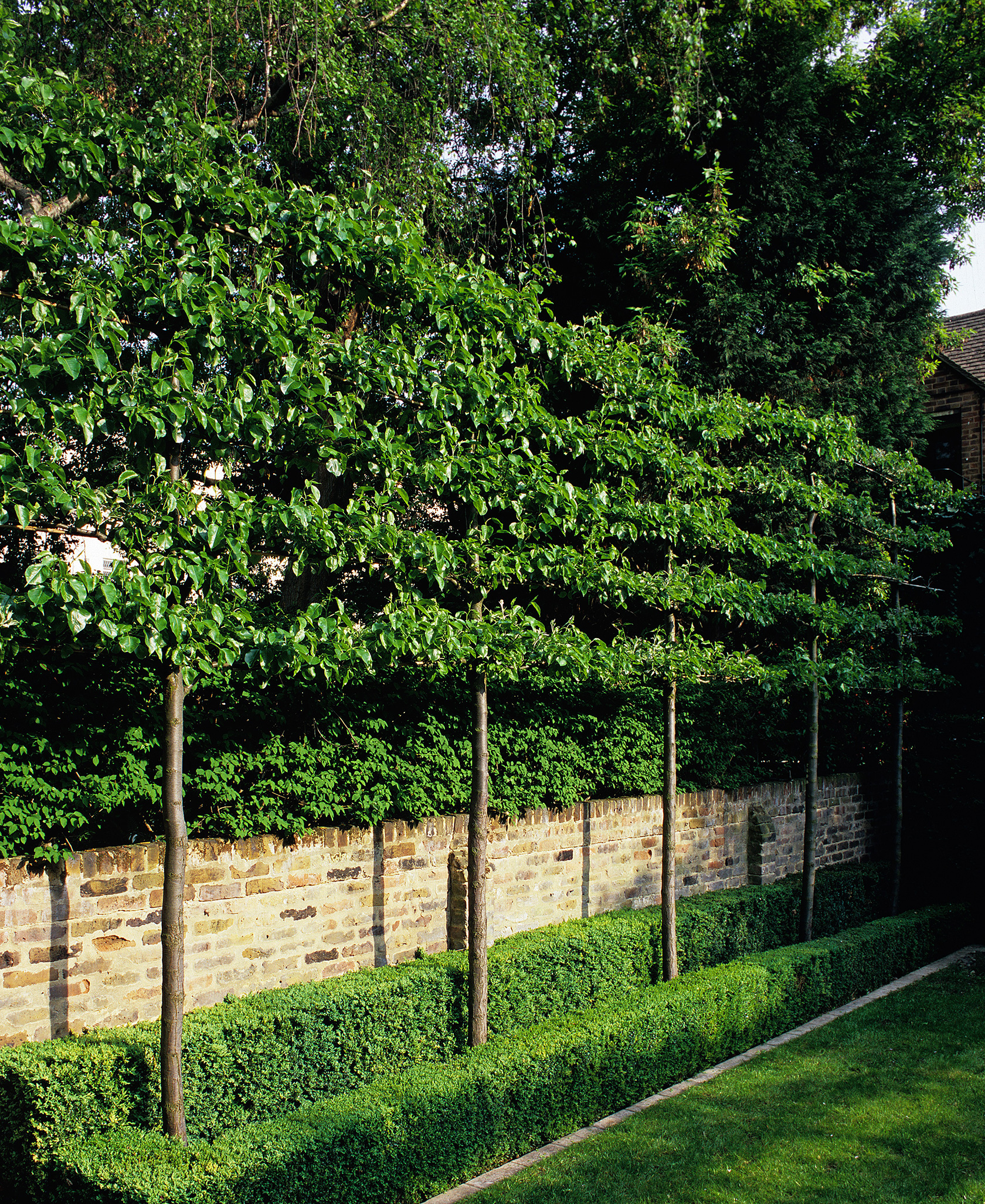 Landscaping Screening Trees : Luciano giubbilei kensington gardens