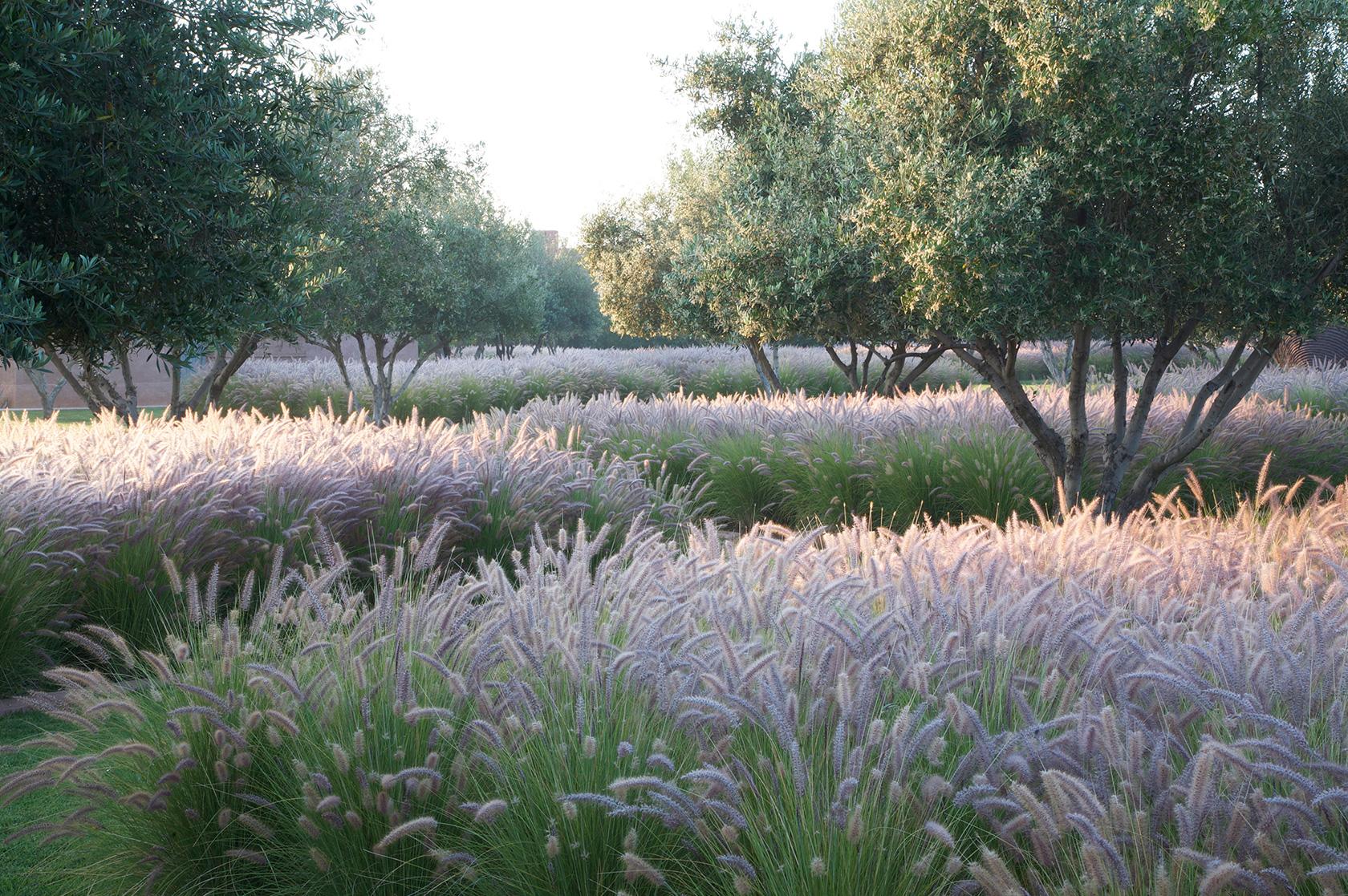Luciano giubbilei morocco for Ornamental grass garden design pictures